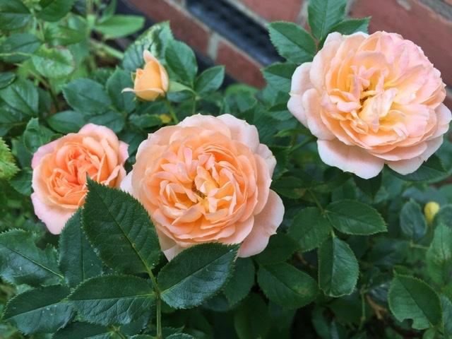 Gardening Year 2019 –  Six ofSummer